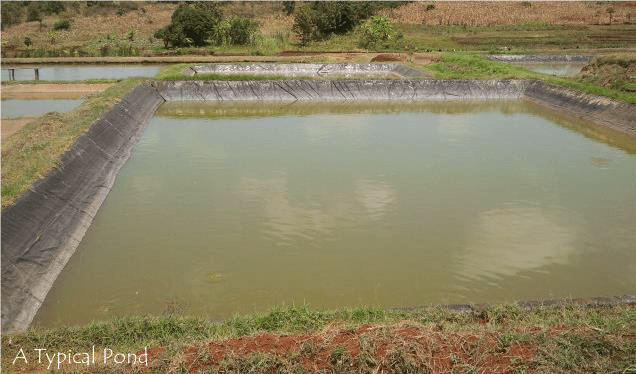 Fish Pond Design And Construction Agro 4 Africa